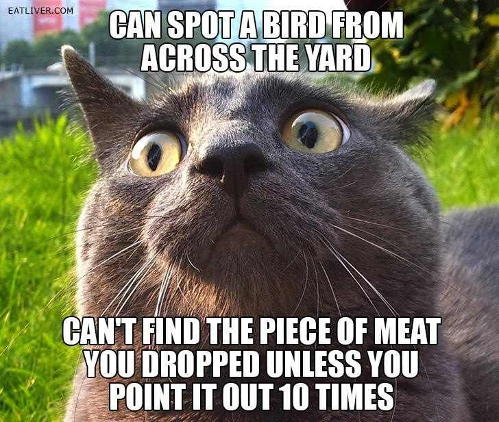 funny cat pictures with words