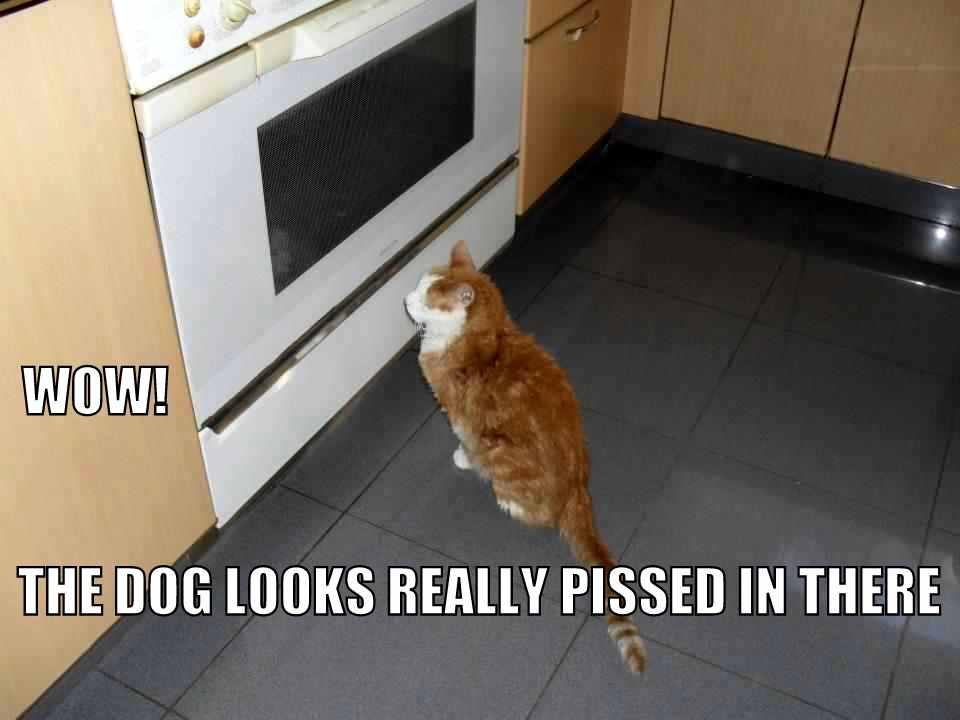 funny cat pix