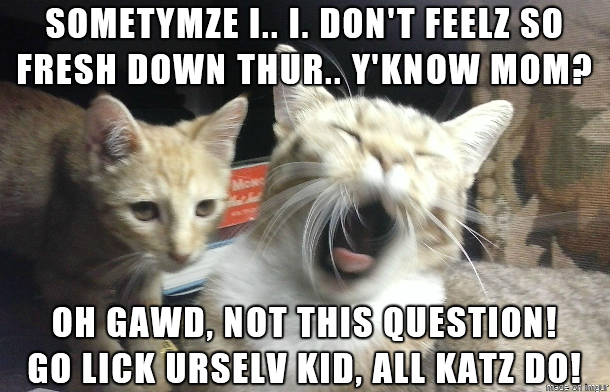 Funny Kid Friendly Cat Memes : Funny pictures of cats with captions