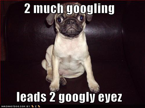 funny dog pictures for kids