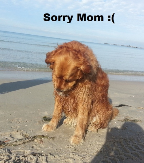 funny dog pictures with sayings