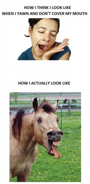 funny horse faces