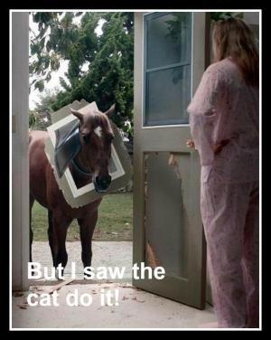 funny horse images