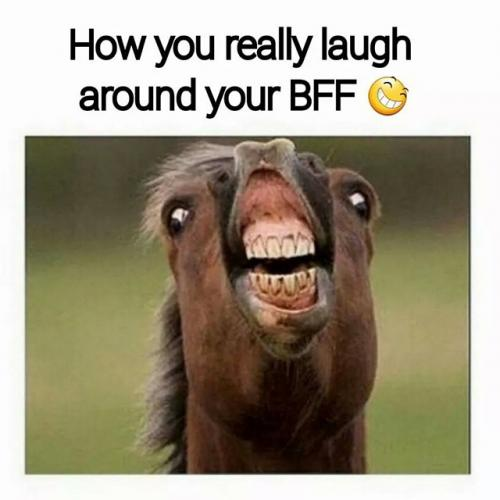 funny horse jokes
