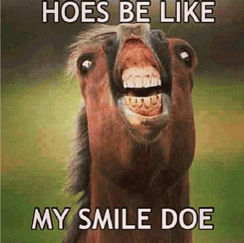 funny horse photos
