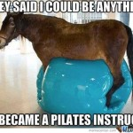 18 Best Funny Horse Pictures Of All Time