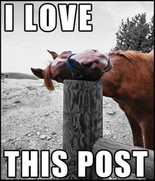 Image result for horse funnies