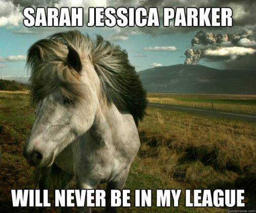 funny horse pictures