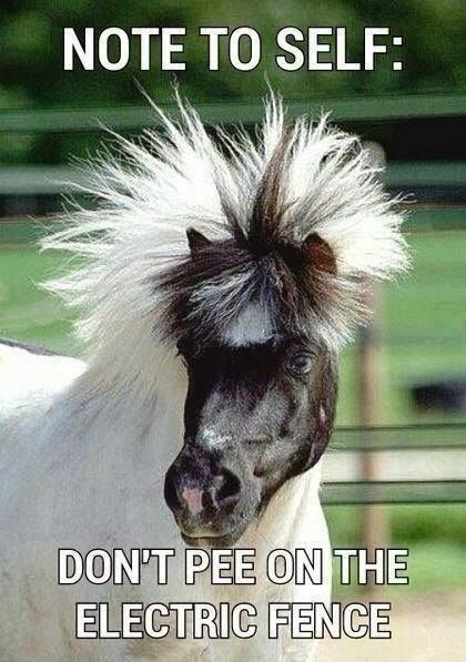 funny horses pictures