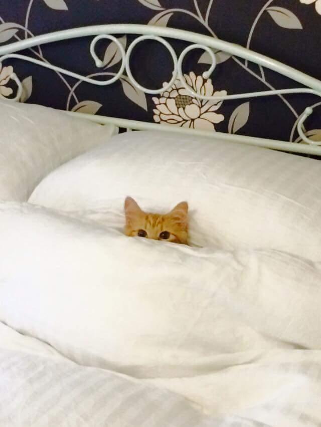 funny kitten images