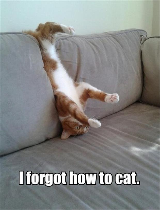 funny kitten pictures