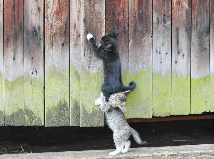 funny kittens and cats