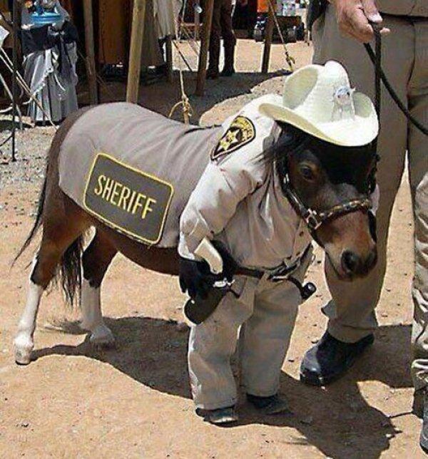 funny pics of horses