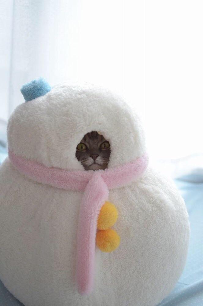 funny pics of kittens