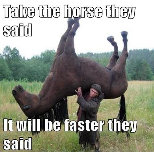 funny pictures of horses