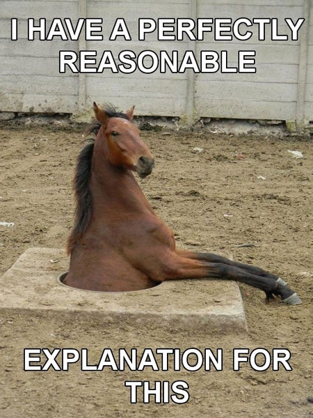 horse funny