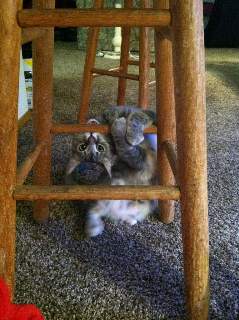 images of cats and kittens