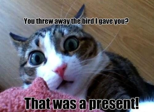 images of funny cats