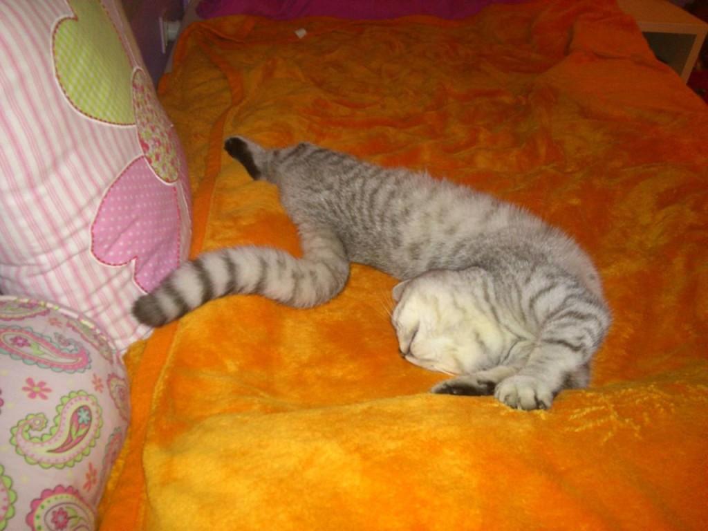 kitten photos