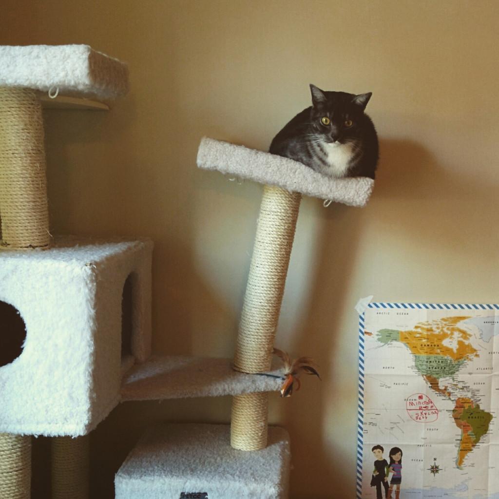 photos of cats