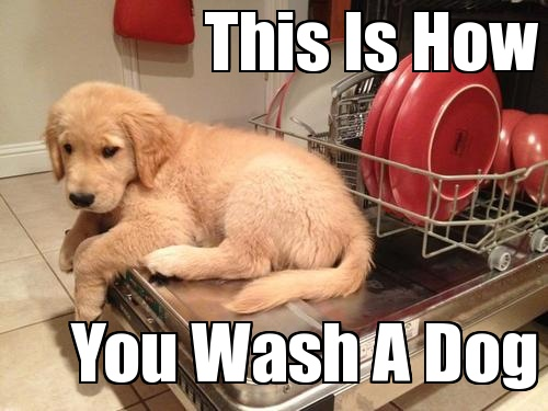 Funny Dog Memes: 33 All Time Best Funny Dog Pictures With Captions