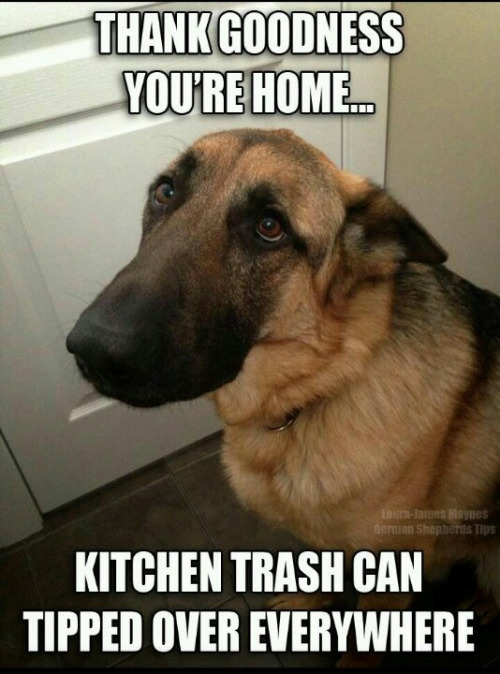Funny dog face meme - photo#47