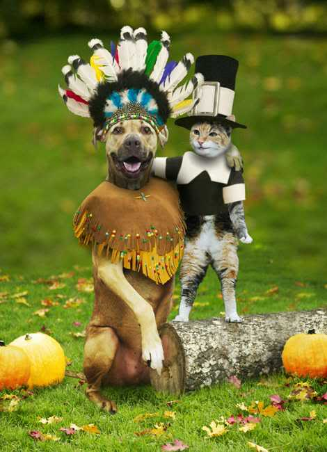 funny thanksgiving animals