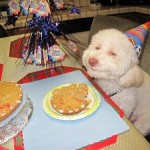 30 Dogs Celebrating Their Birthday With Special Dog Birthday Cakes