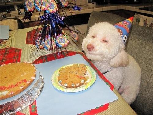 birthday cake for a dog