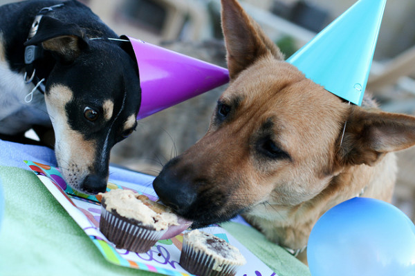 birthday for dogs