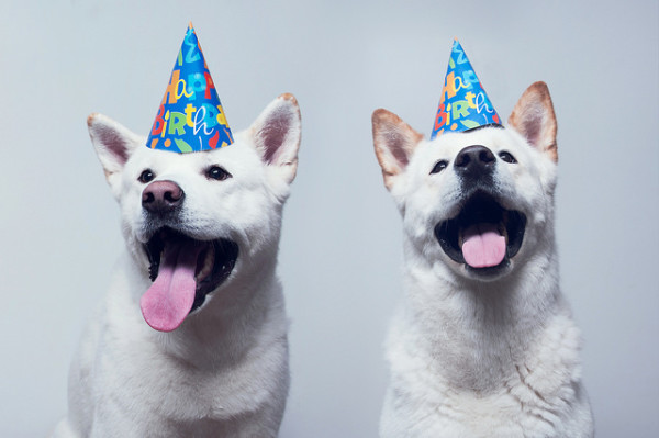 birthday parties for dogs