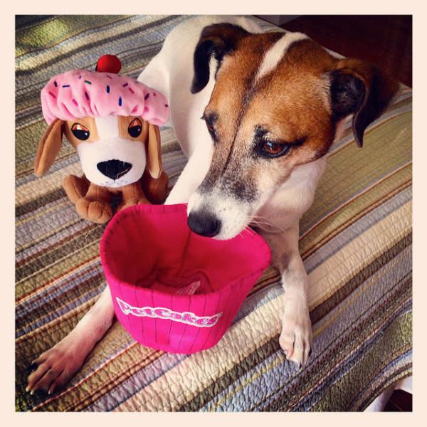 dog birthday toys