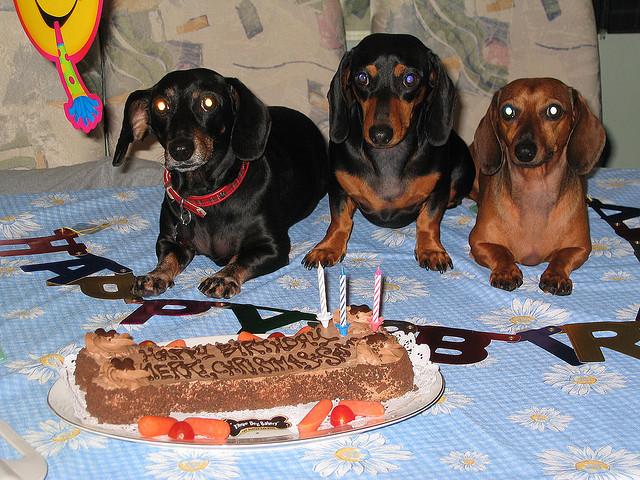 dog birthday treat
