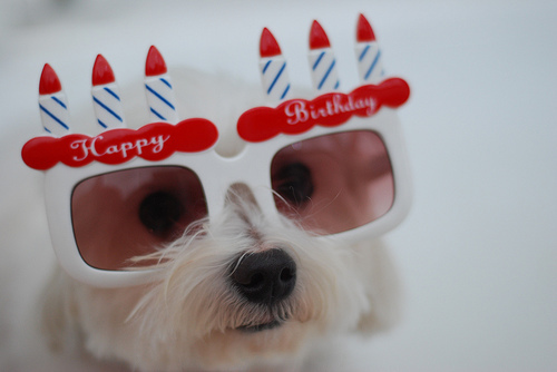 happy birthday dog glasses