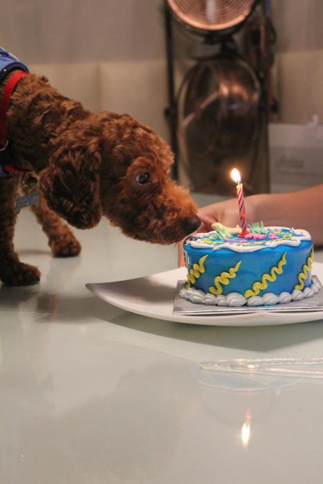 doggie birthday