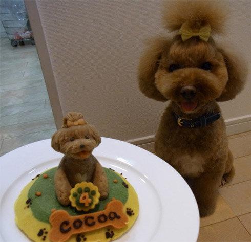 30 Dogs Celebrating Birthday With Special Dog Birthday Cakes