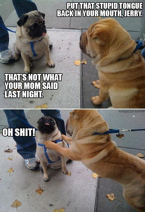funniest pug