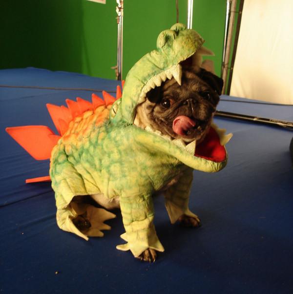 pug dog funny