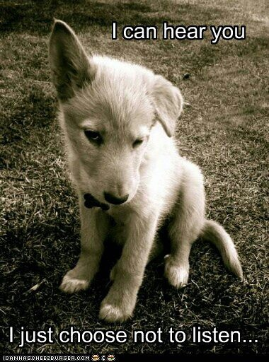 cute pictures of dogs