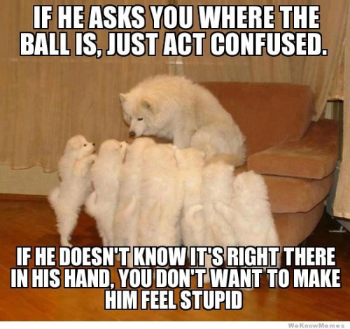 funny puppy pictures dog
