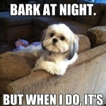 The 31 All Time Best Funny Puppy Pictures With Captions