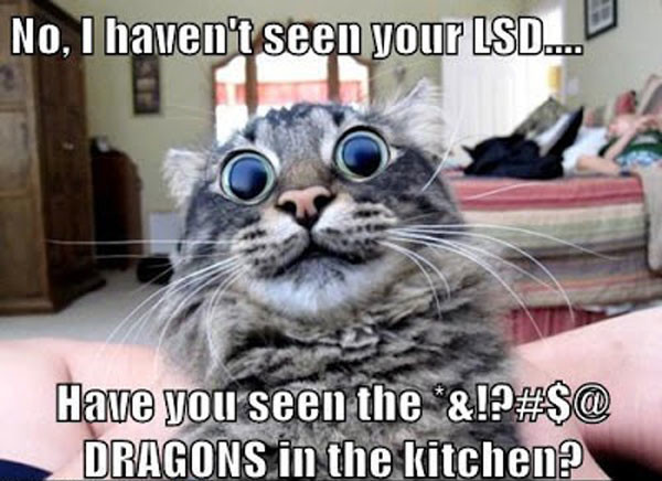 best funny cat captions of all time