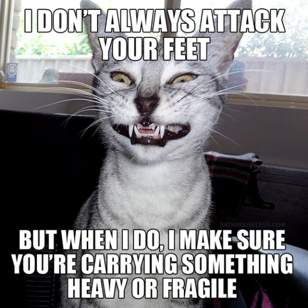 comedy cat pictures with captions