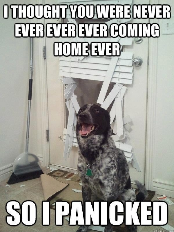 dog pictures with funny captions
