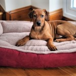 Large Dog Beds – The 19 Best Dog Beds For Large Dogs