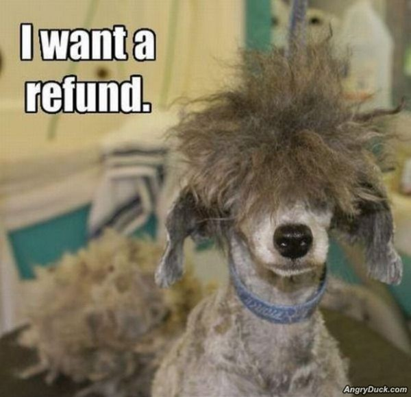 funny animal caption pictures