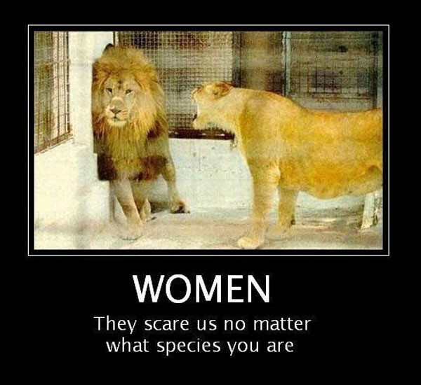 funny animal images