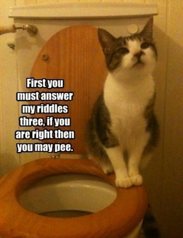 funny cat photos with captions