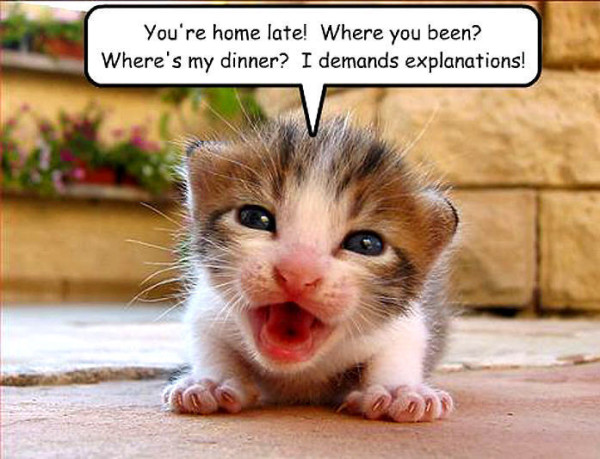 funny cat pics with captions