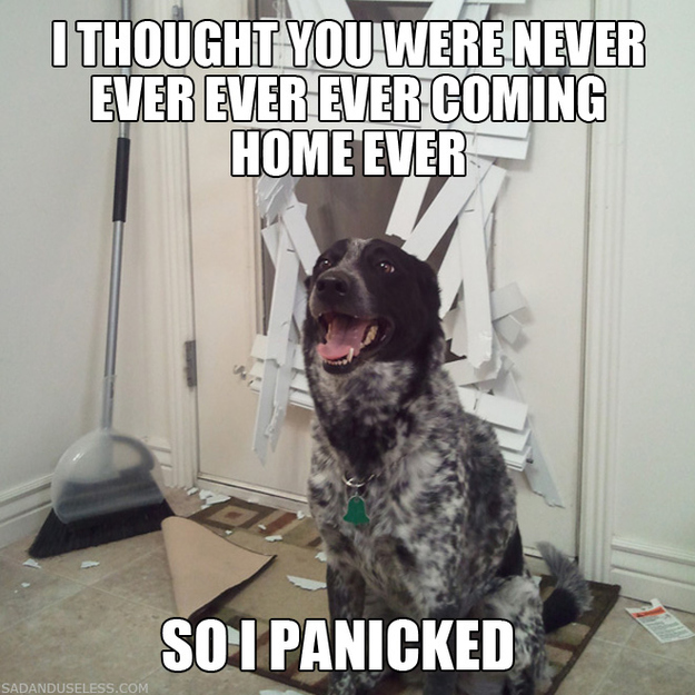 funny pics with captions of animals